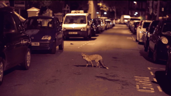 fox_lightyears